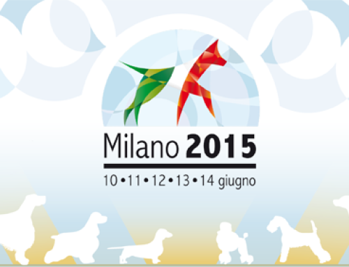 World Dog Show 2015.